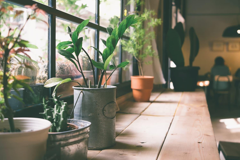 plantes à mettre en cuisine